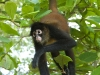 spider_monkey