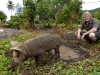 luke-and-pig