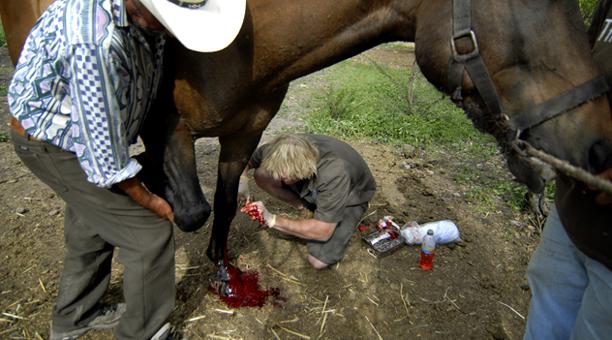 mexico_horse