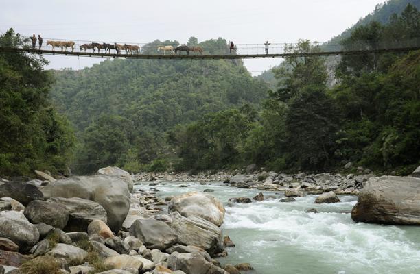 nepal_mules2