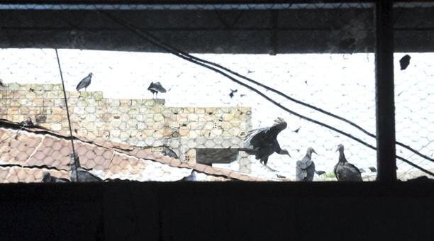 peru_vultures