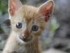 peru_cat3