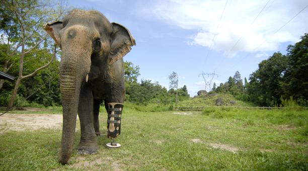 thailand_elephant
