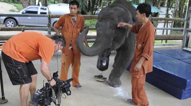 thailand_elephant2
