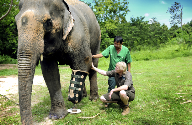 thailand_elephant3