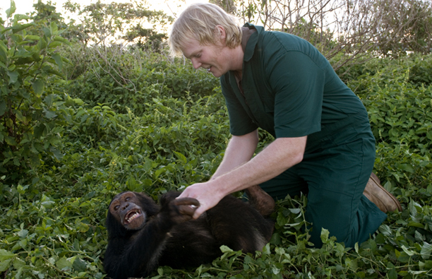 luke_tickling_chimp