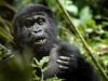 uganda_gorillas6