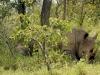 uganda_rhino4
