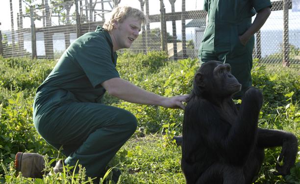 uganda_chimps2