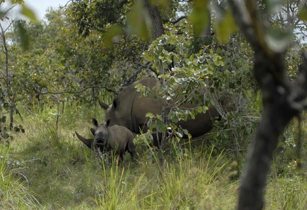 uganda_rhino