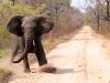 charging-elephant-copy