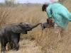 zambia_elephant4